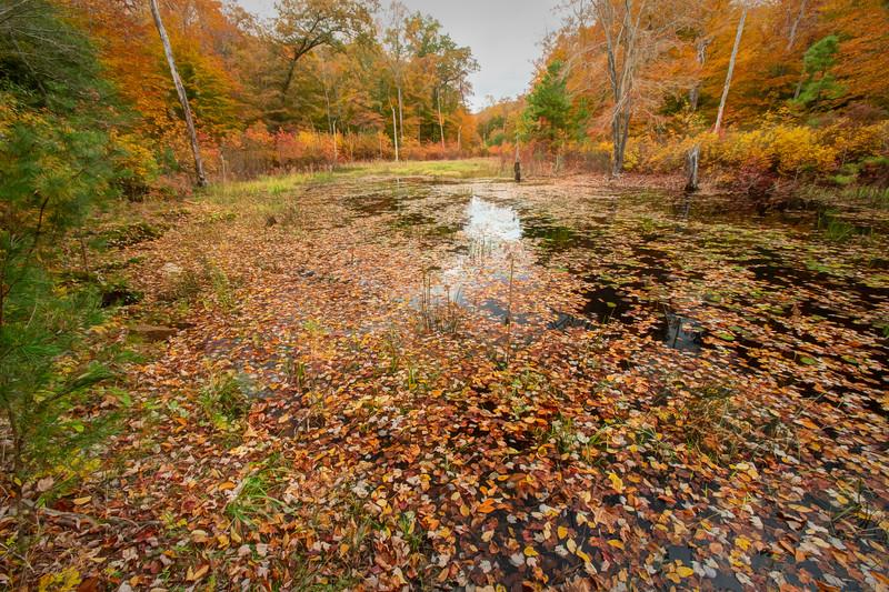 Autumn at Peeper's Pond