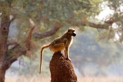 Lower Zambezi