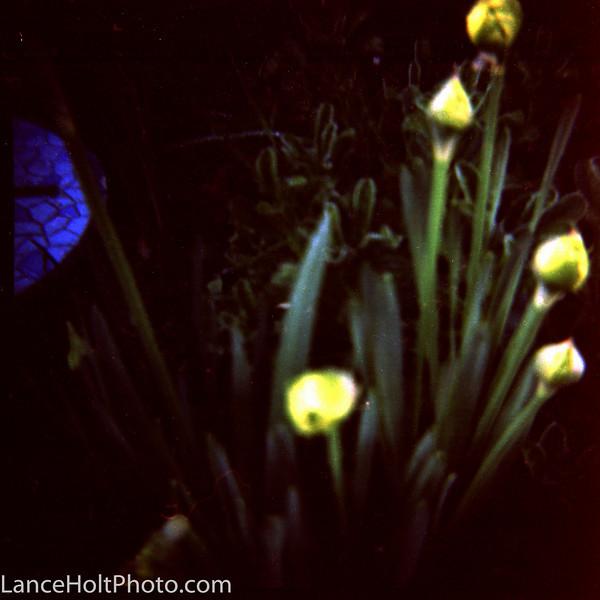 diana paper lilies Scan20015.jpg