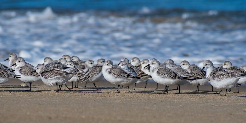 Birds 8049