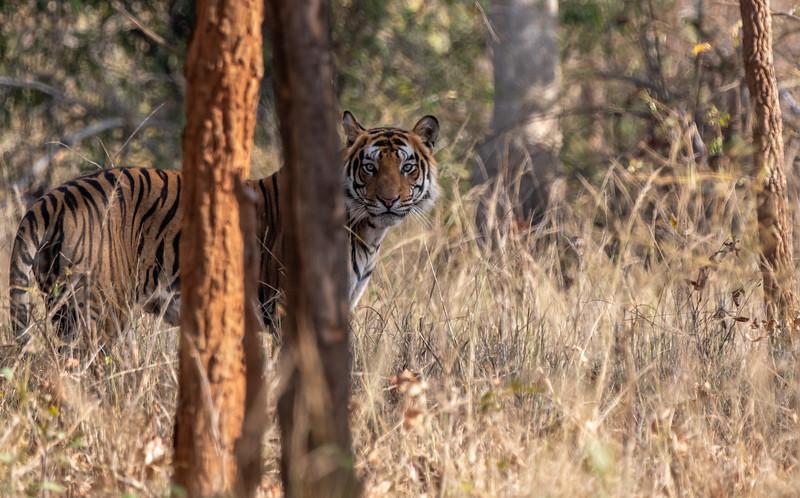 India_April_2019-561.jpg