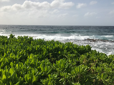 17-033 Curacao 9 Feb Bob