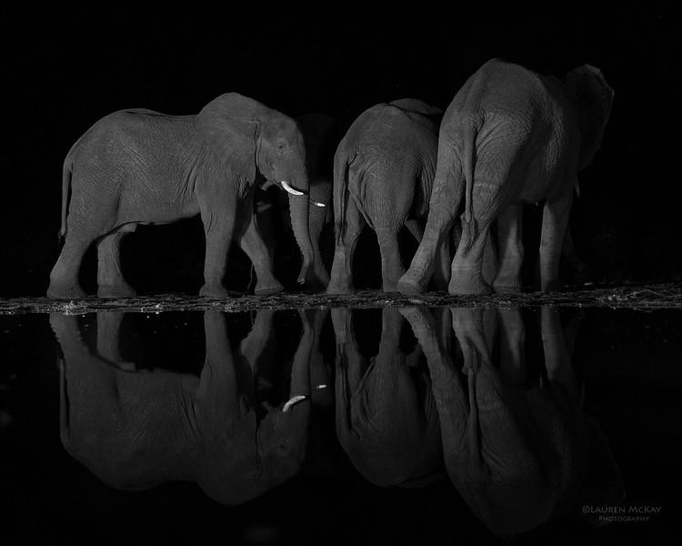African Elephant, b&w, Zimanga, South Africa, May 2017-2.jpg