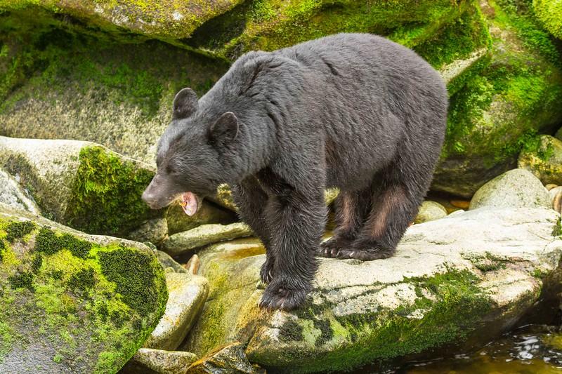 Anan Bears 25.jpg