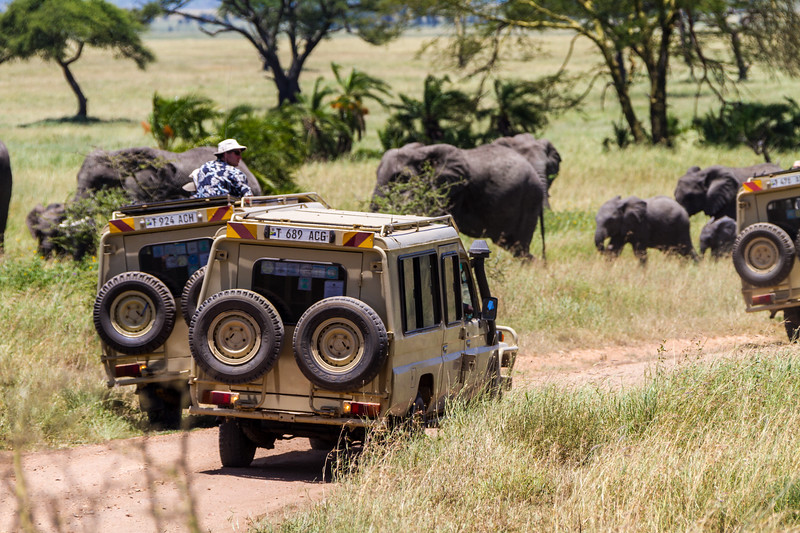 Tourist watching elephants in national park - East Africa - Tanzania