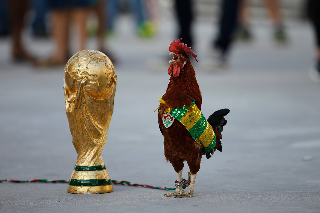. A pet rooster named Paquita Fred stands next to a replica of the World Cup trophy in front of Maracana stadium, in Rio de Janeiro, Brazil, Wednesday, June 11, 2014. The 11 year old rooster wearing a cape with the colors of the Brazilian national soccer team and a medallion of the local Fluminense soccer team gets his name from Fred, the Brazilian footballer who plays as a striker for Fluminense and is now one of the members of the national soccer team. The World Cup soccer tournament starts Thursday. (AP Photo/Leo Correa)