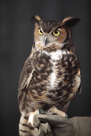 03092019 Owls at Logans Garden Shop - Proofs