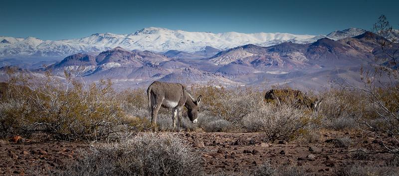 Death Valley-114.jpg