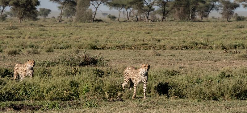 Tanzania_Feb_2018-275.jpg