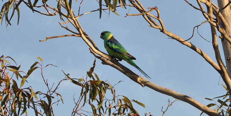 Parrot #1.jpg