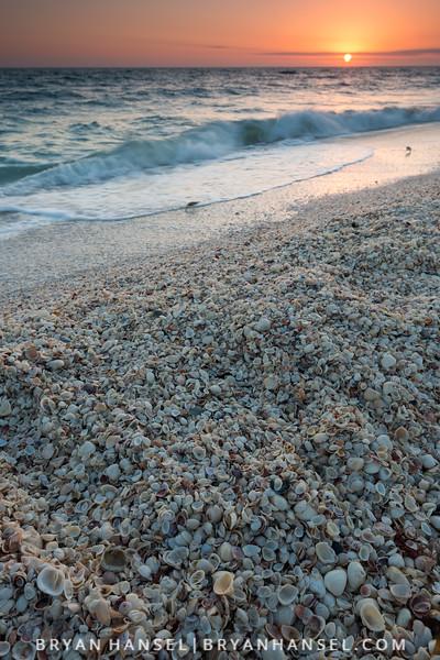 Sanibel Island Shells