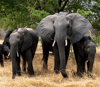 Africa 2016 - Animals