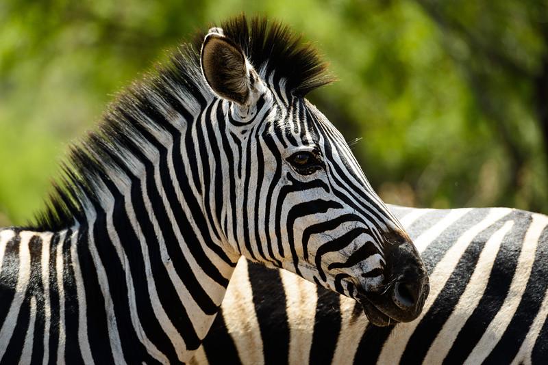 Pilanesberg-20130217-0525