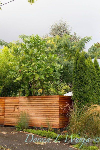 Magnolia macrophylla wooden fence_0343.jpg