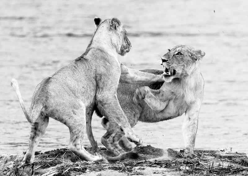Monochrome Wildlife Prints