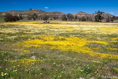 Carrizo Plain, March 2017