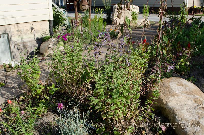 20120617_Garden_0016.jpg
