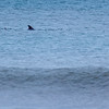 DolphinsSandbridgeBeach-001