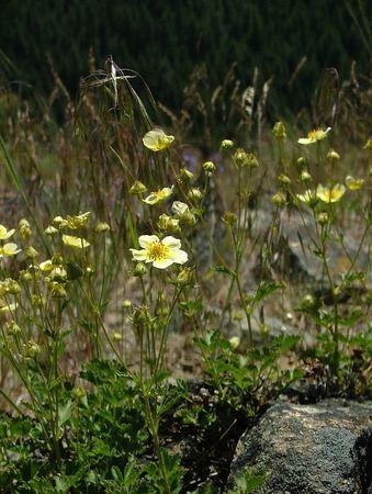 Flowers Shots