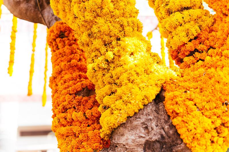 Yashodhar-Carolyn-100.jpg