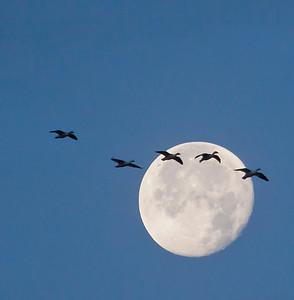 Bill Prosser - Bird Motion