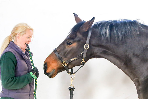 Anglo European Studbook mare and young stock grading - Ladykirk
