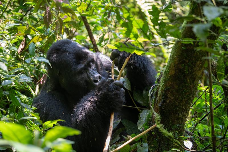 Uganda_T_Gor-254.jpg