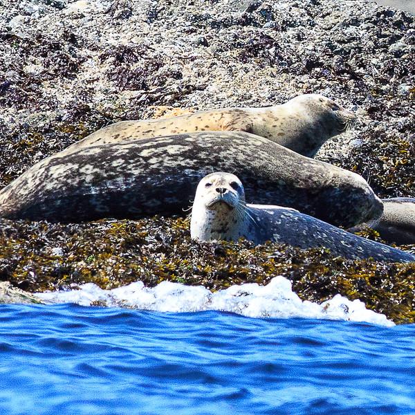 Seals 1-2119.jpg