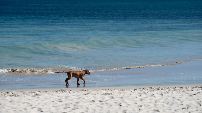 Beach-2817-Edit.jpg