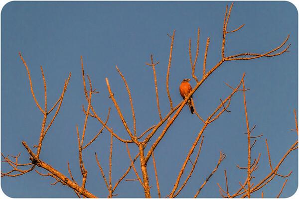 Birds of VA
