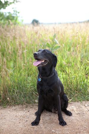 Dog Photos
