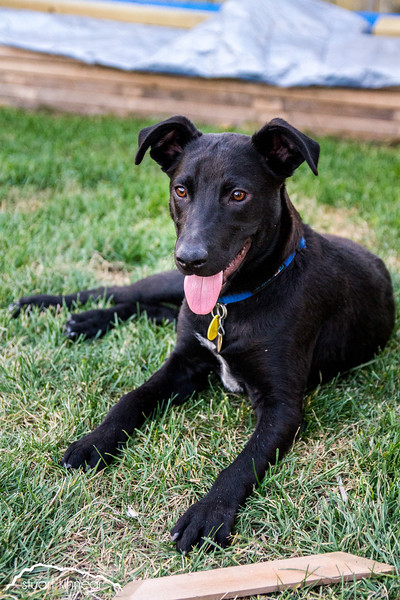 Animals for Adoption at AARCS - October 2014