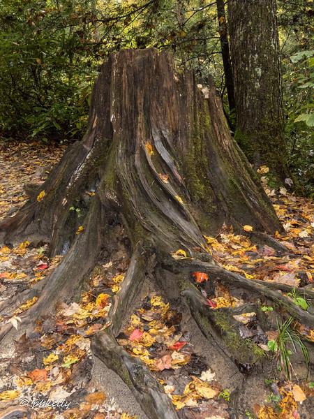 Intricate stump along the way.