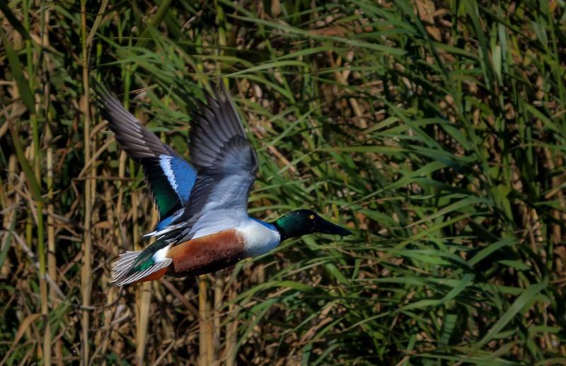 Same bird as previous photo.