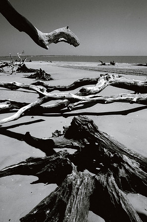 Jeckle Island Beach Driftwood on Georgia Seacoast