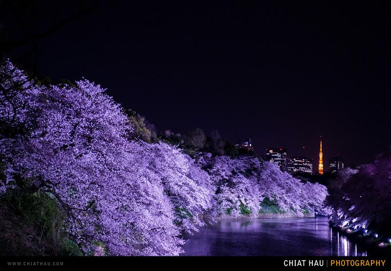 Japan_Tokyo_Apr_2016-392.jpg
