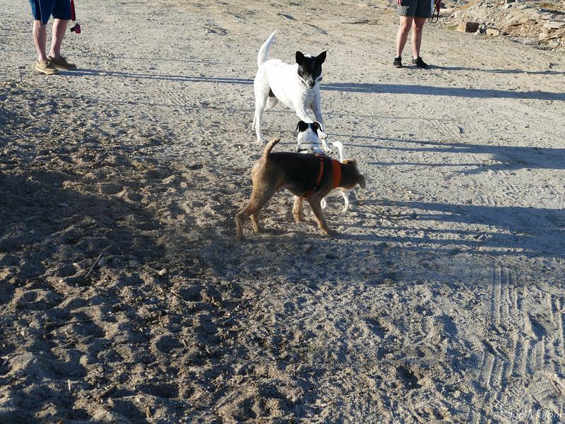 dog walk in the desert (11 of 13).jpg