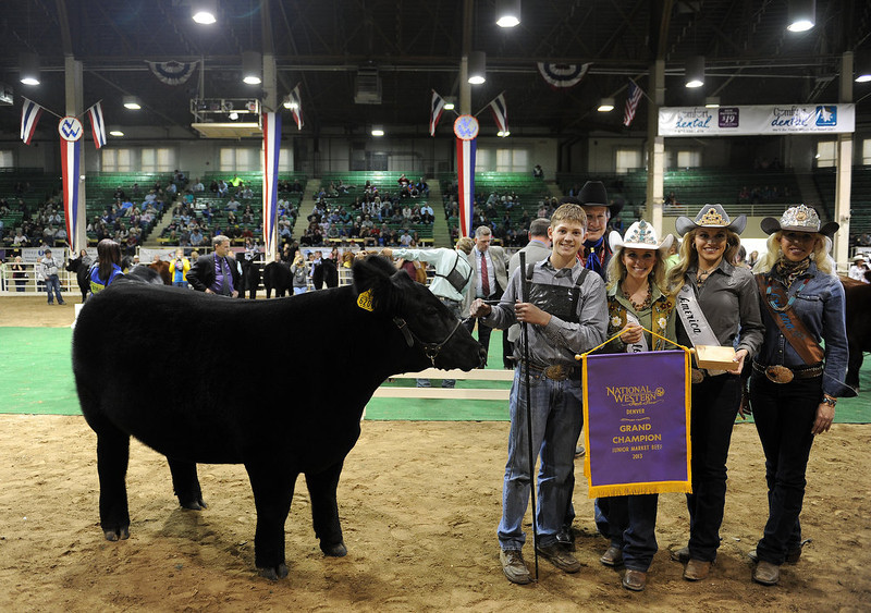 . DENVER, CO- JANUARY 24:    Junior Market beef grand champion winner Shilo Schaake, 15, of West Morlin, Kansas, stands with his crossbred steer Trevor and rodeo queens as they get photographed after the event inside the Stadium Arena.  The Junior market beef grand champion and reserve grand champion were chosen in the Stadium Arena at the National Western Stock Show on January 24th, 2013.  The two large mixed breed steer will be auctioned off January 25th.  (Photo By Helen H. Richardson/ The Denver Post)