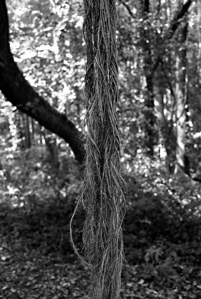 005 Get a Rope.jpg