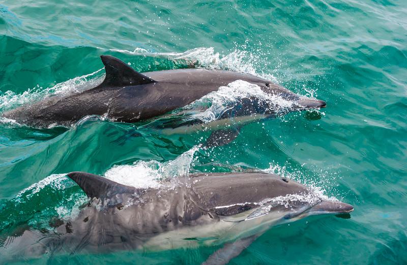 Dolphin-28.jpg