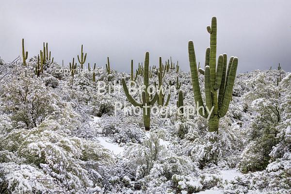 Arizona Galleries