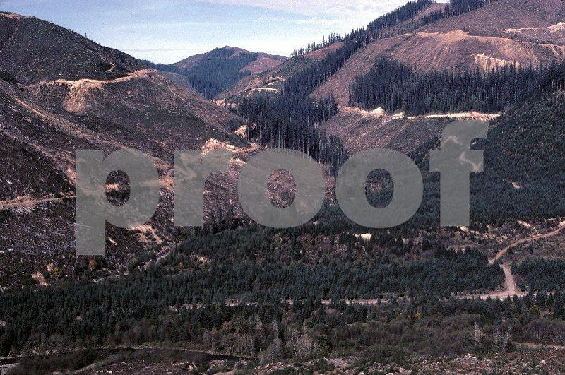 Series #1: Recent clear cutting on the North Fork of the Kalama River taken on Oct. 21, 1978.