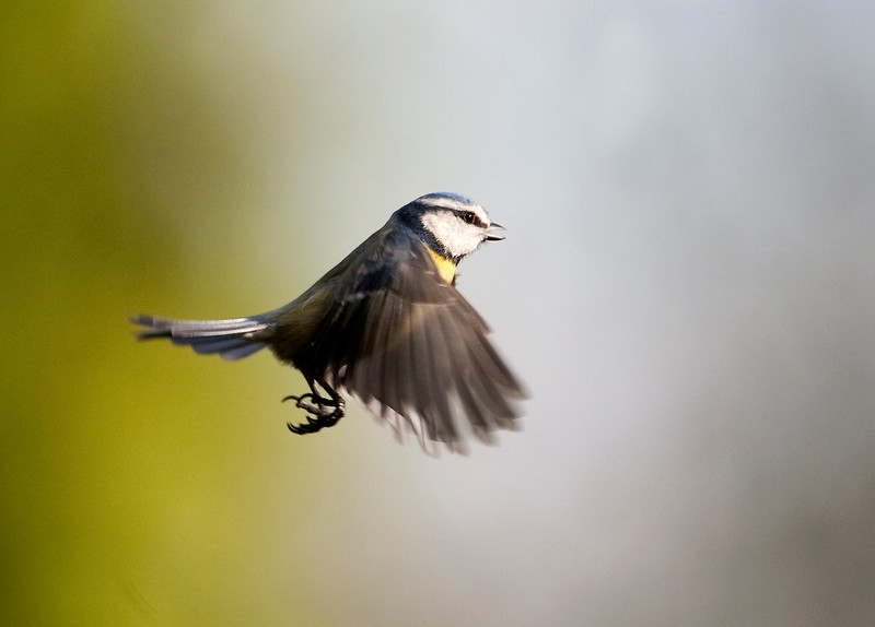 Blue tIT 4 Flight.jpg
