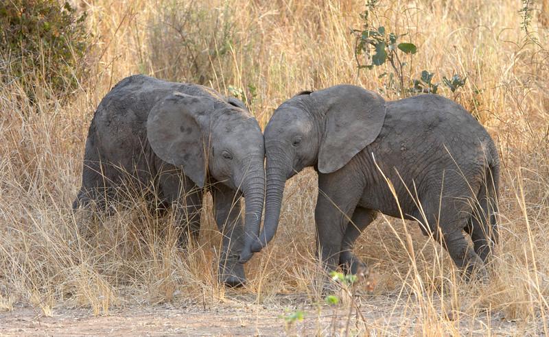 Elephant - 6433.jpg