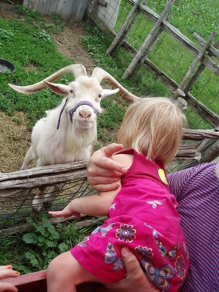 Here Mr. Goat.JPG