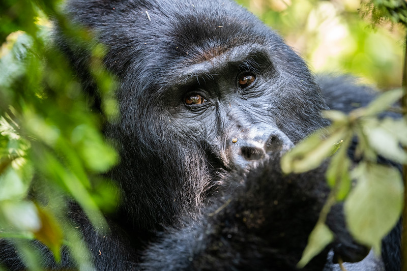 Uganda_T_Gor-1689.jpg