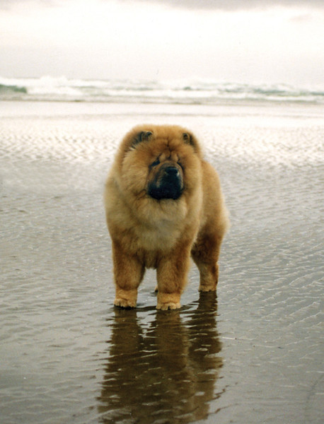 Vincent at 7 months of age at the Oregon Coast