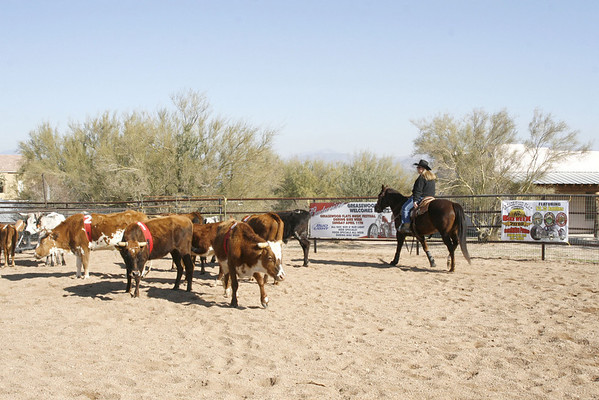 Lost Cowboy Ranch-Sorting 1-8-11