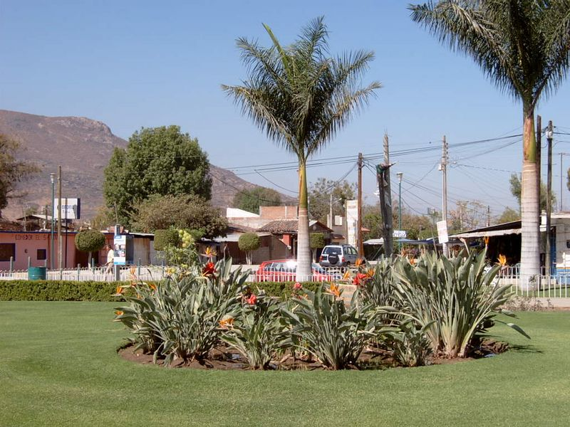 Mexico-Tule-Tree24.jpg