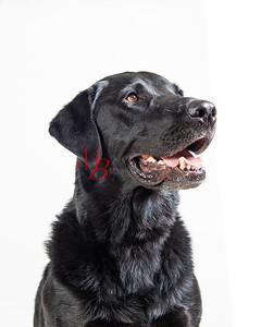 Gus - Animal Clinic Spotlight Pet